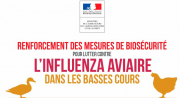 Information grippe aviaire